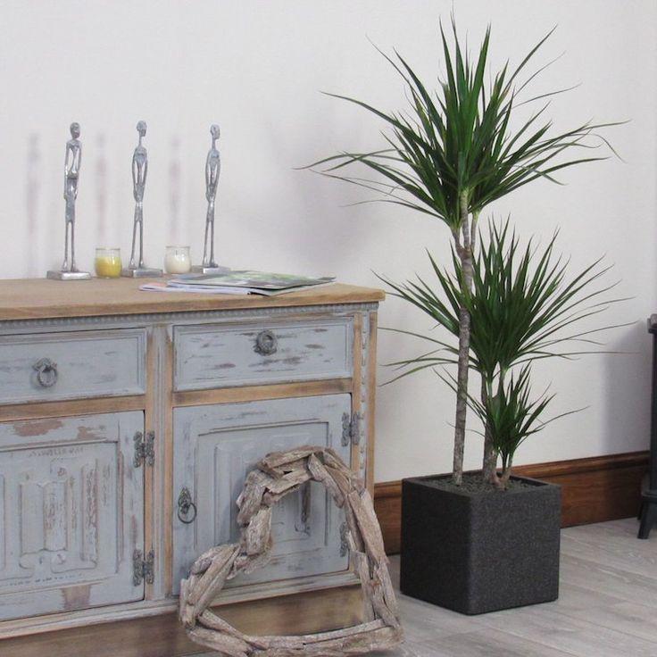 die besten 25 zimmerpflanzen wenig licht ideen auf. Black Bedroom Furniture Sets. Home Design Ideas