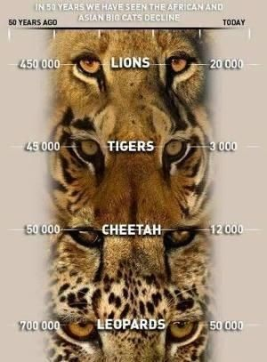 #CecilTheLionContest Trophy hunting and poaching have to stop! PETITION: Demand Justice for Cecil the Lion in Zimbambwe...http://www.thepetitionsite.com/821/738/351/demand-justice-for-cecil-the-lion-in-zimbambwe/