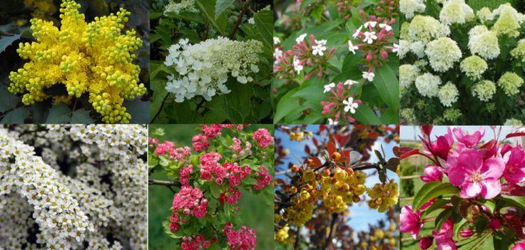 Декоративные цветущие кустарники и деревья