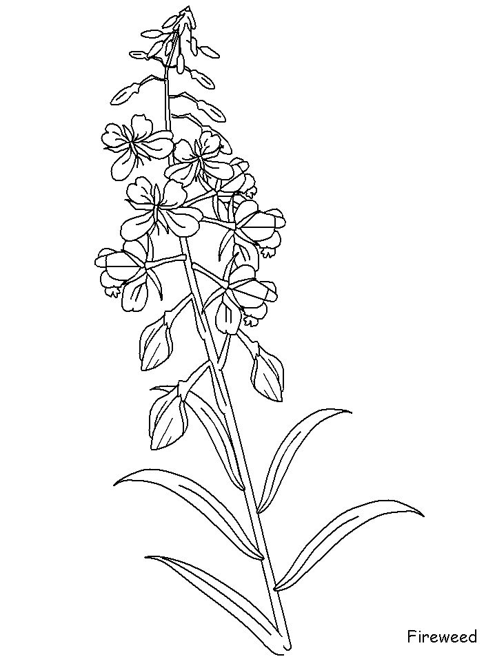 flower weeds coloring pages - photo#7