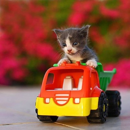 beep beep: Cats, Animal Pics, Kitten, Animals, Big Jobs, Pet, Funny Stuff, Funnies, Funny Animal