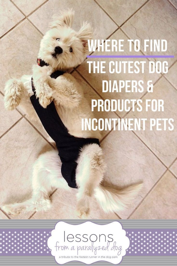 If You Re Dealing With An Incontinent Dog Or Incontinent Cat Here