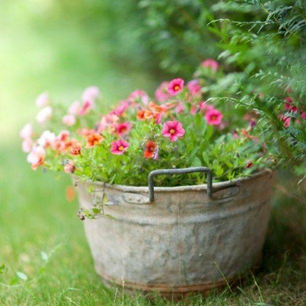 Een oude zinken teil met mooie roze bloemen...een prachtige combinatie !