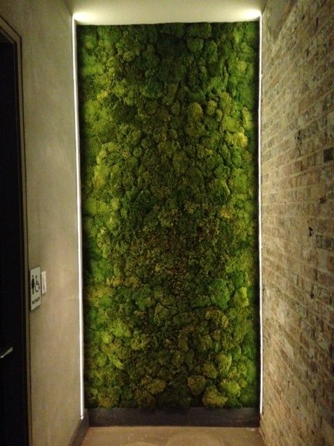 Interior Moss Wall BellyQ In Chicago