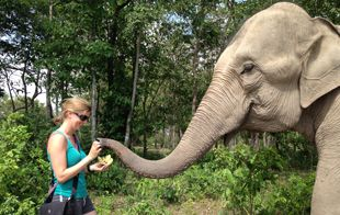 Phnom Penh Wildlife Tours - full day with donation, includes tigers and elephants (nonprofit sanctuary)