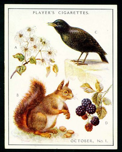 """Player's Cigarettes  """"A Nature Calendar"""" (series of 24 large cards issued in 1930) #19 October (1)"""