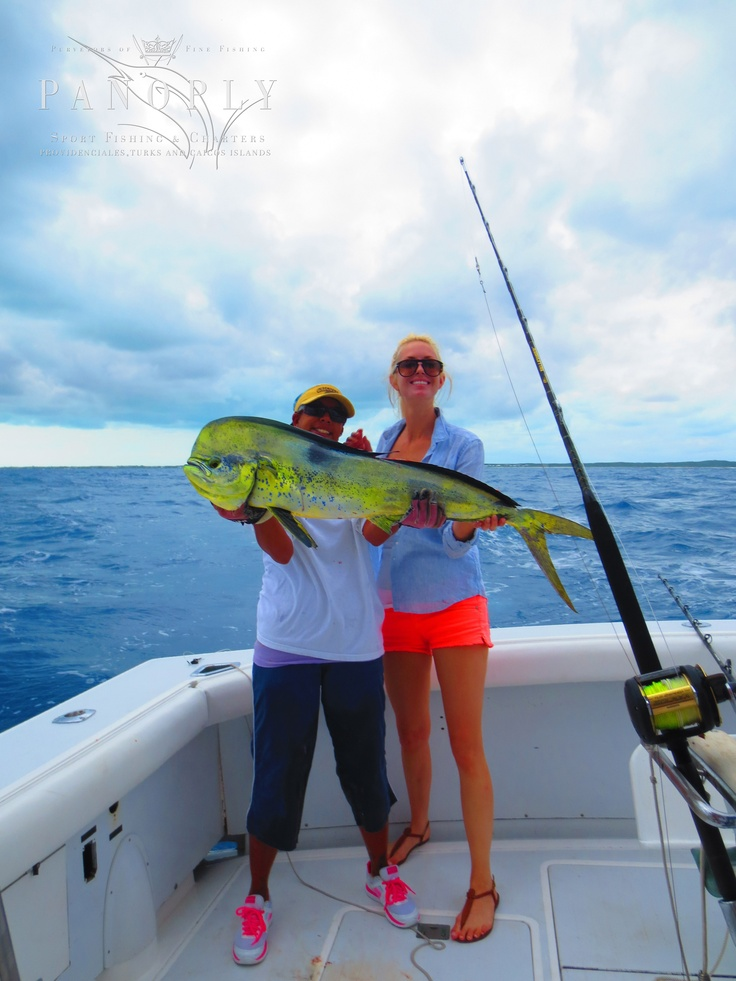17 best images about brilliant bright mahi mahi on