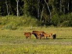 De route loopt gedeeltelijk over het Kadoelerveld, waar Schotse Hooglanders grazen en wat voorheen landbouwgrond was en later over de dijk die de grens van de Noordoostpolder aangeeft.  Hier heeft men een mooi uitzicht over het Land van Vollenhove en het Kadoelermeer.