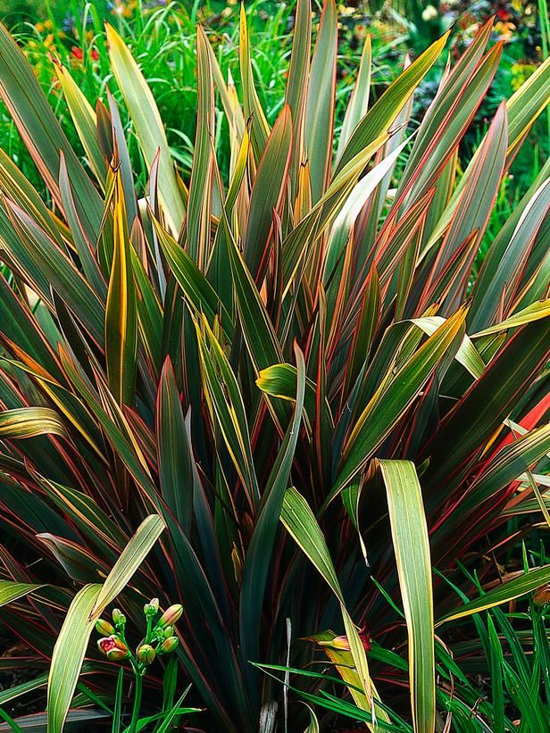 19 best images about folhas f rmio on pinterest for Spiky ornamental grasses