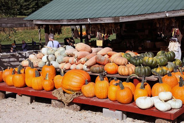 Within an hour drive of D.C. there are dozens of farms and orchards that offer pumpkin picking (and hayrides, corn mazes and cider donuts, too). Here are our picks for the cream of the crop.