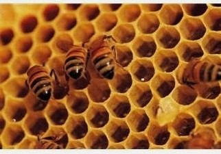 """Survival Friday: 15 Alternative Uses For Honey   Backdoor Survival  """"Honey! It's not just a tasty treat!"""" Okay, that was corny but, yeah... Honey is AMAZING!"""