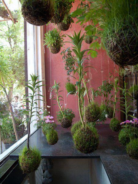 Japanese kokedama string gardens