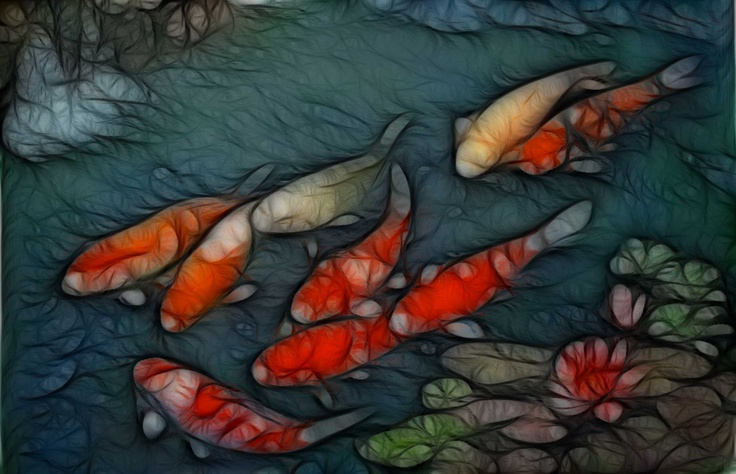 17 best images about beautiful fish wallpaper on pinterest for Koi meaning in english