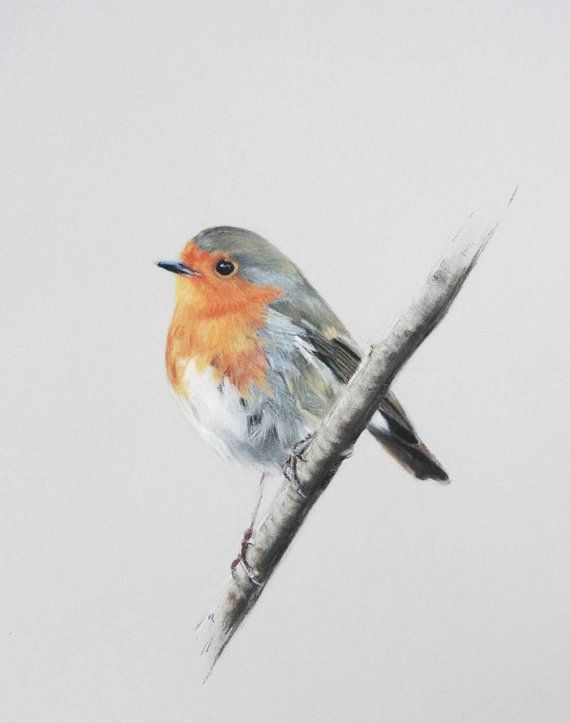 Robin – Limited Edition Giclee Print of original pastel drawing by Imogen Mann