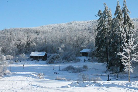 Cabins snuggled in for a cozy winter.