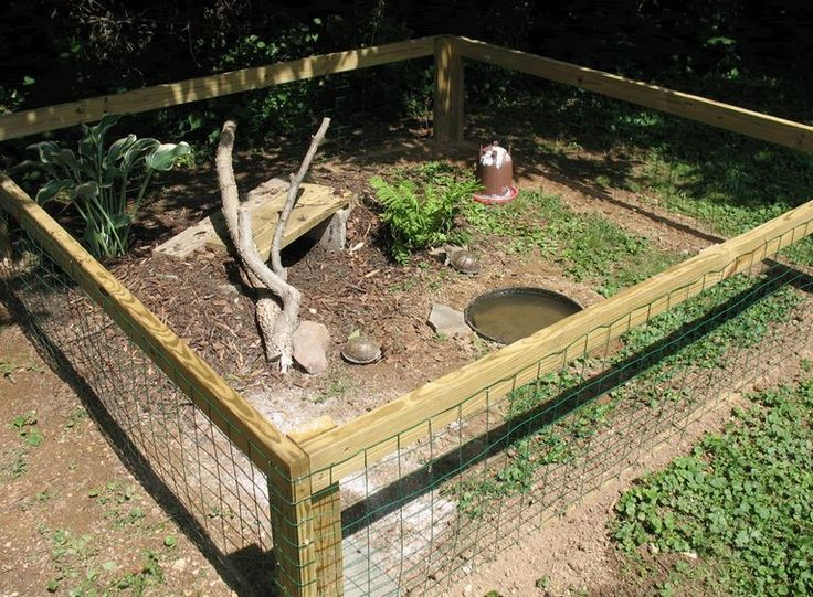 1000 ideas about tortoise enclosure on pinterest tortoise table - 1000 Images About Messy The Redfoot Tortoise On