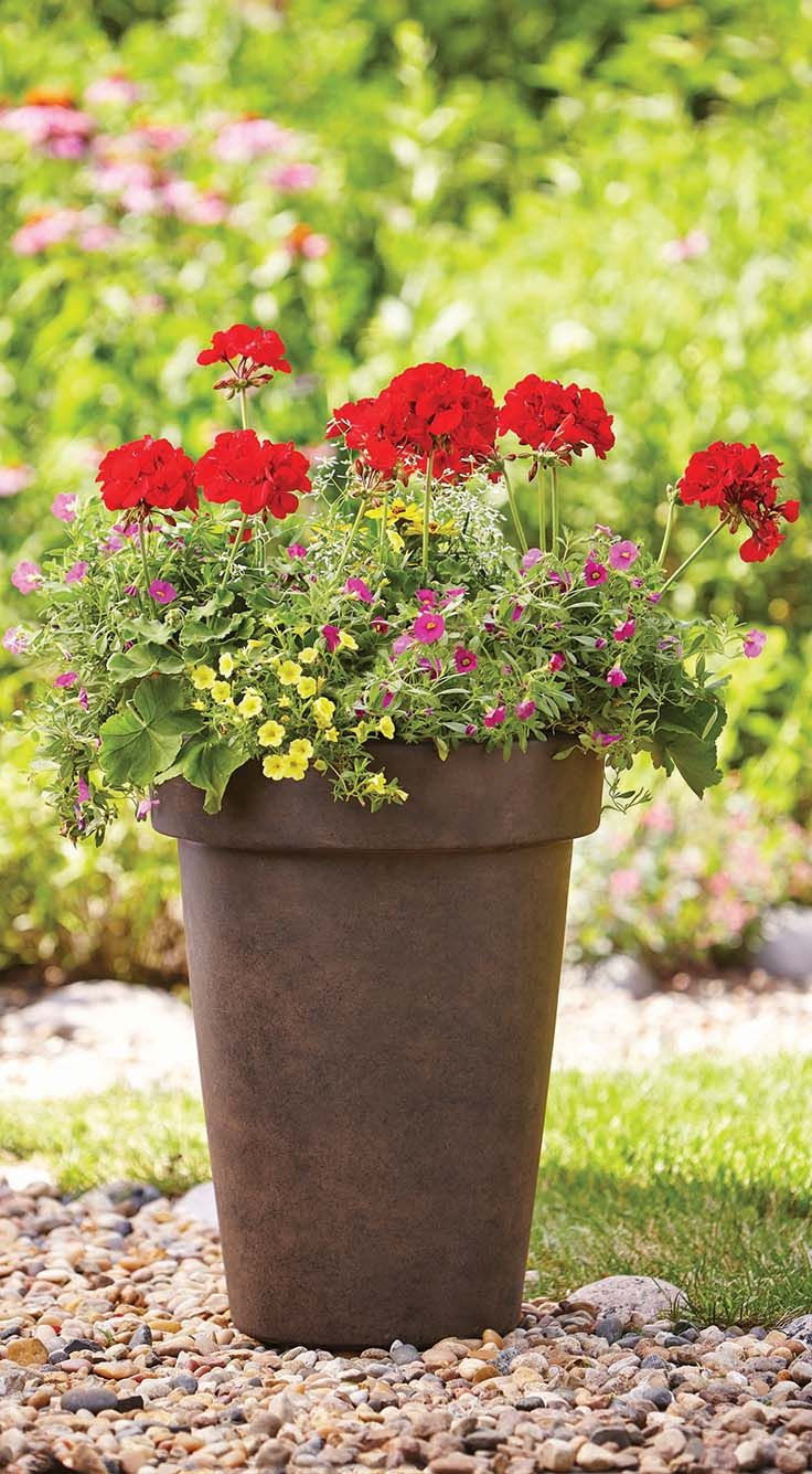 38 Best We Love Container Gardens Images On Pinterest Container Garden Better Homes And