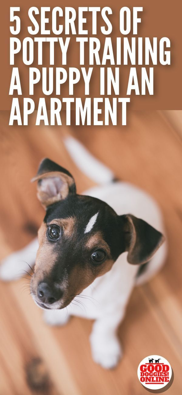 5 Secrets On How To Potty Train A Dog In An Apartment Potty Training Puppy Apartment Dog Potty Dog Training