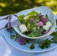 Villiyrttisalaatti ja kirpeä marjakastike