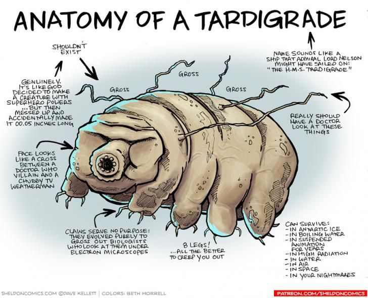 Anatomy of a Tardigrade