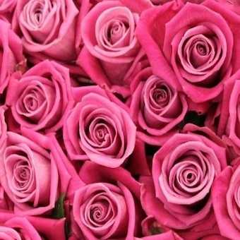 I have suggested my friend services regarding delivery of wedding flowers within 365 days. She was happy and satisfied with their delivery services and quality of work which they have provided her within 365 days.