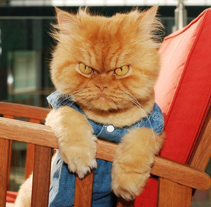 9. Garfi, o gato mais zangado do mundo