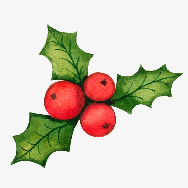 Christmas Holly Decorations Vector Material Holly Decorations