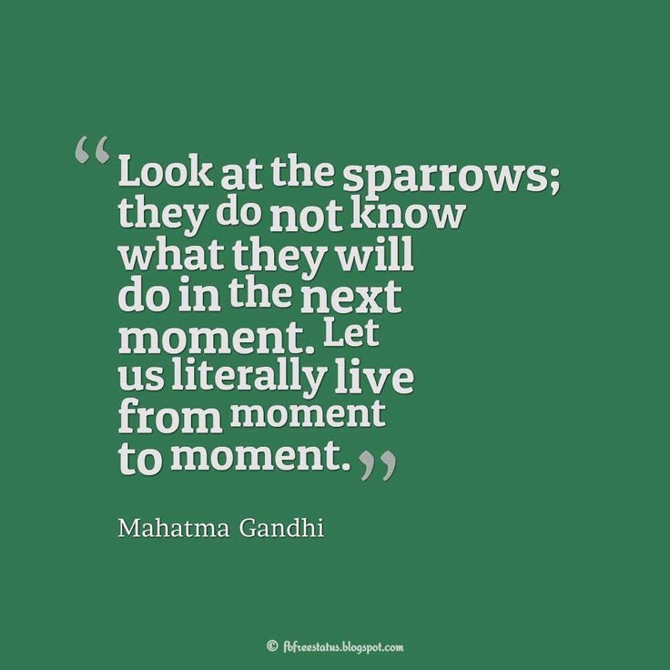 """Look at the sparrows; they do not know what they will do in the next moment. Let us literally live from moment to moment."" – Mahatma Gandhi #life #quotes"