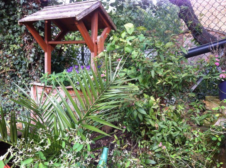 My garden jungle