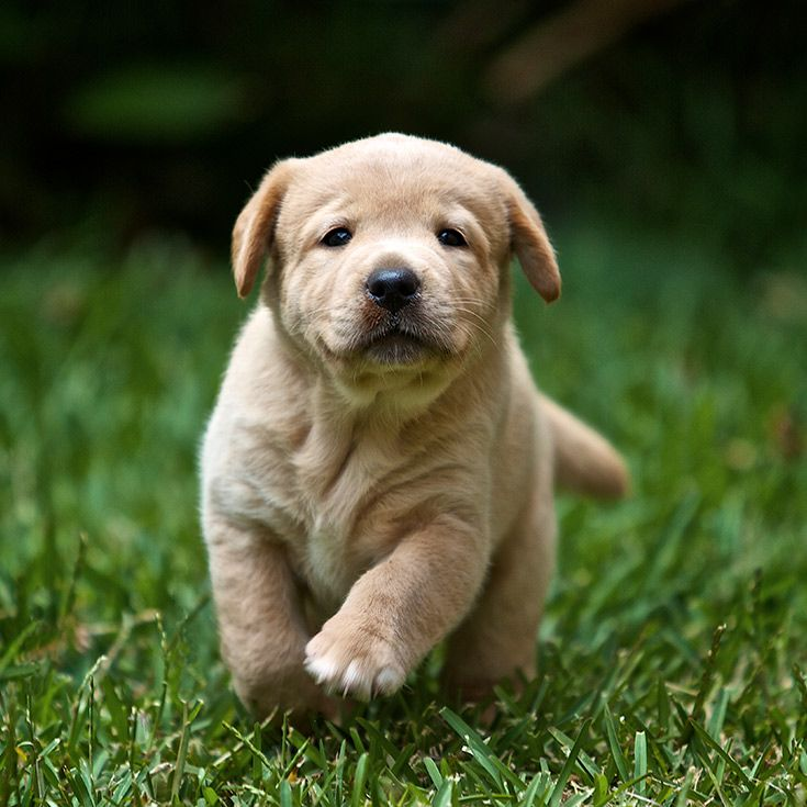 Best 25 ohio breweries ideas on pinterest where is ohio for Dog house for labrador retriever