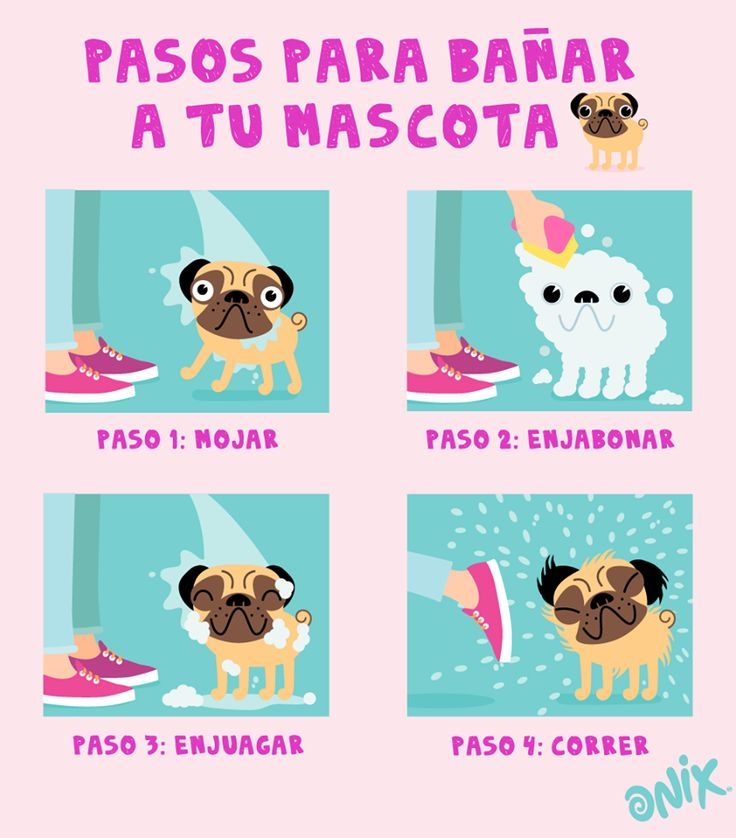 17 best images about onix fun on pinterest movie times d and smile - Como banar a un perro ...