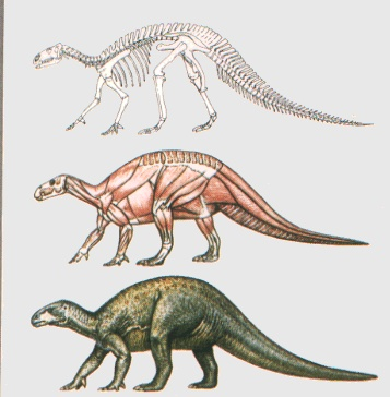 iguanodon in profile