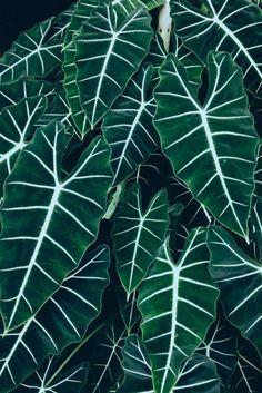 Nature's patterns | lisadominguez | VSCO