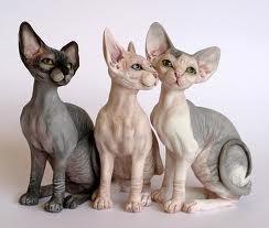 www.petclic.es la mayor tienda online de productos para #mascotas. La mayor biblioteca de contenido y consejos sobre mascotas. 1.000 consejos. 50.000 imágenes. Foto del #gato #sphinx