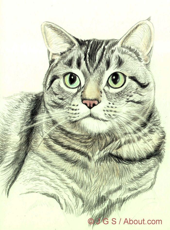 Zeichnen Sie eine majestätische Katze mit Buntstift