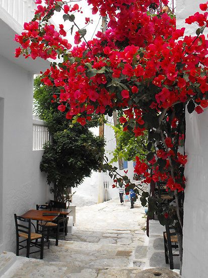 Always Greece, with their cobblestone streets, outdoor eating spots and eye catching florals. * via life is very beautiful