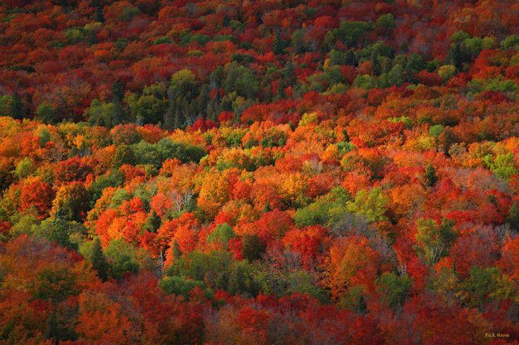 Grand Rapids Mn Fall Colors Fall In Minnesota Showcase