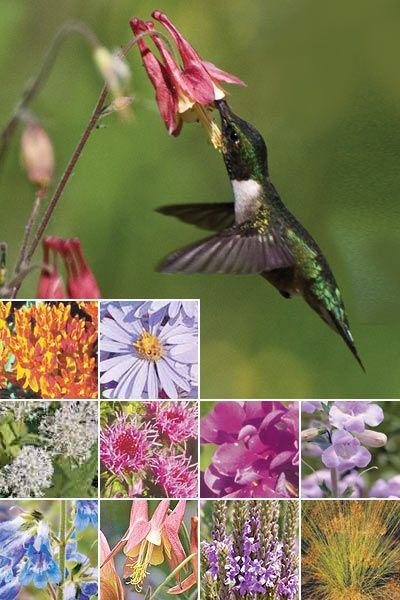 images about Wisconsin Native Plants on Pinterest