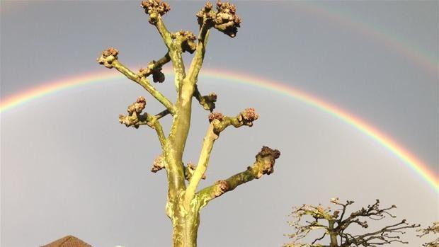 DR Vejrets brugere er vilde med at tage billeder af regnbuer. Her er det Andreas Jørgensen, der har foreviget en regnbue i Odense onsdag aften.© Brugerbillede