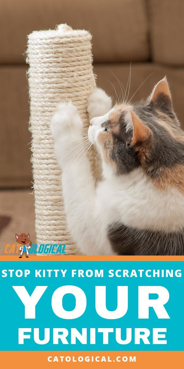 How To Stop Your Cat From Scratching Your Couch And Other