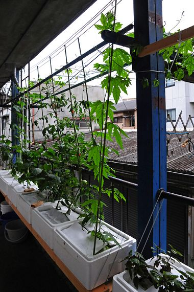 17 Best Images About Garden Hydroponics On Pinterest