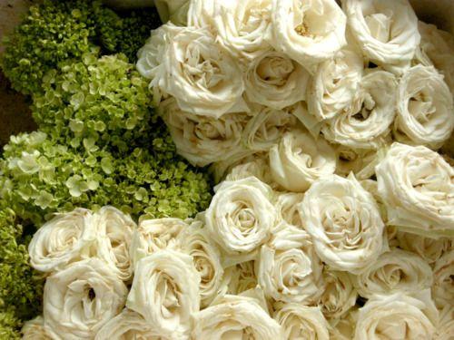 Very pretty flowers.