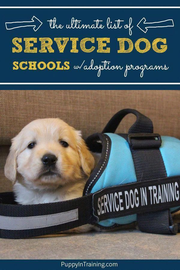 Take The Quiz Screened How To Train Your Dogs Service Dogs