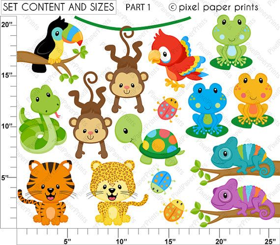 Rainforest Animals Clipart and Digital paper by pixelpaperprints