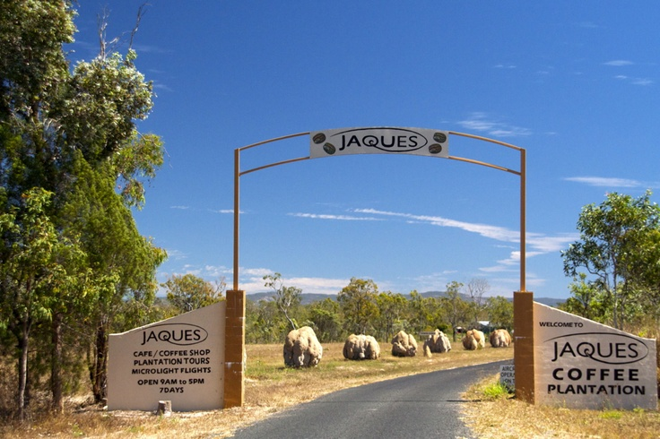 """Visit Jaques Coffee Plantation when driving from Cairns to Mareeba, it is possible to stop here, passing the very interesting """"Termite Avenue"""" before arriving at the cafe for a spectacular coffee. Go on a plantation tour on The Bean Machine!"""