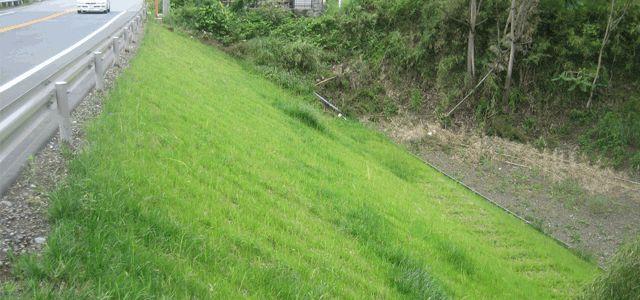 防草シートを法面、土手、斜面に敷く場合の注意点 | 防草シート 20種類 販売と防草情報|比較、効果の違い