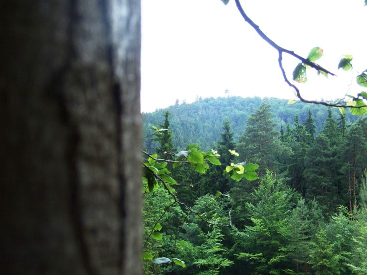 Karlovy Vary - view from Beethoven trail to view-tower name´s Diana