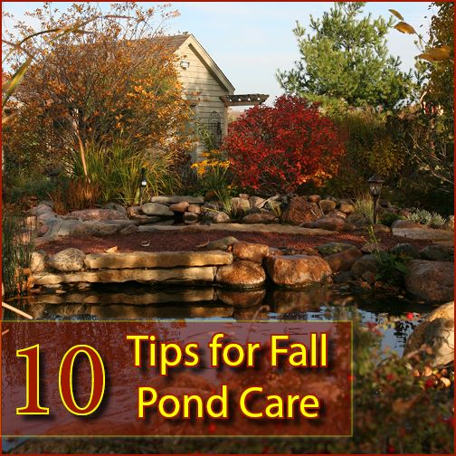 10 Tips for Fall Pond Care. What You Need to Know!