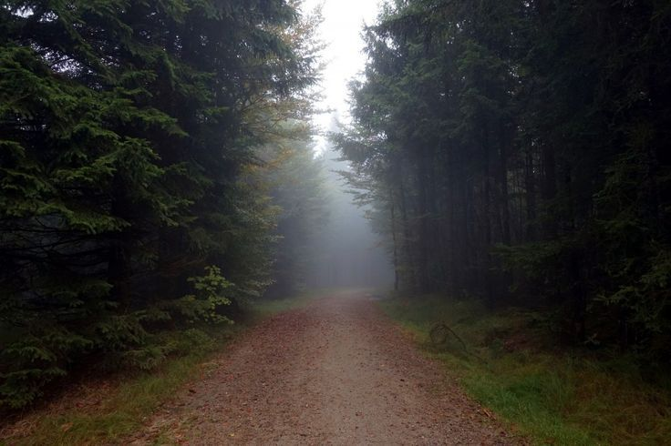 Die 10 schönsten Orte im Schwarzwald – Reisen – #die #in # places # beautiful …   – Reise