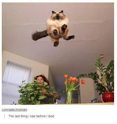 Everything about this picture is amazing. You see a cat flying through the air
